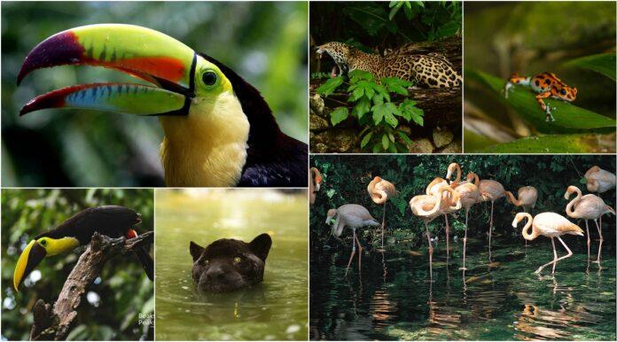 Centroamérica y República Dominicana ofrecen algunas de las especies más exuberantes del planeta 6