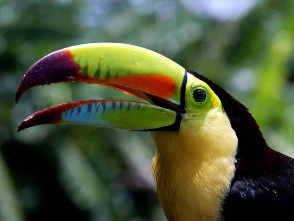 Centroamérica y República Dominicana ofrecen algunas de las especies más exuberantes del planeta 3