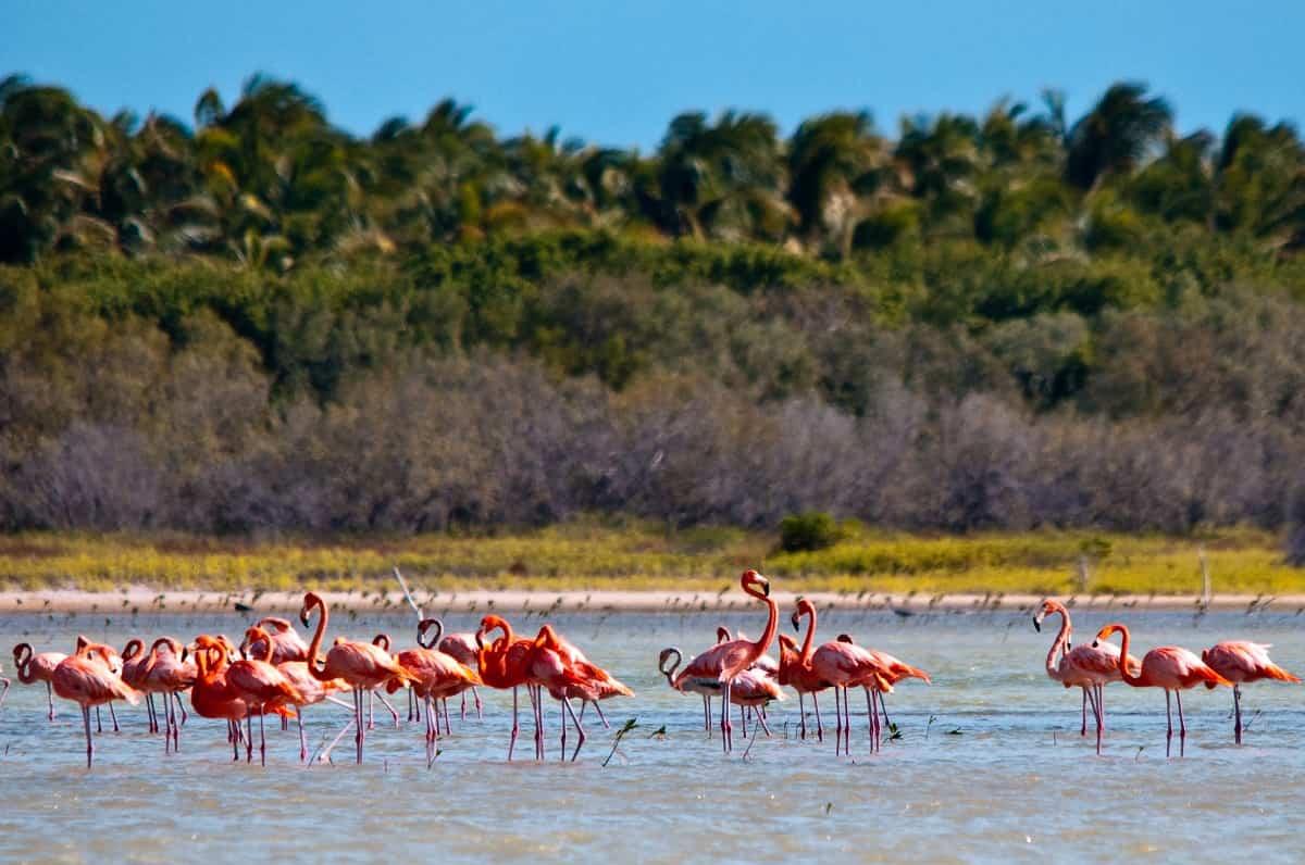 Centroamérica y República Dominicana ofrecen algunas de las especies más exuberantes del planeta 2