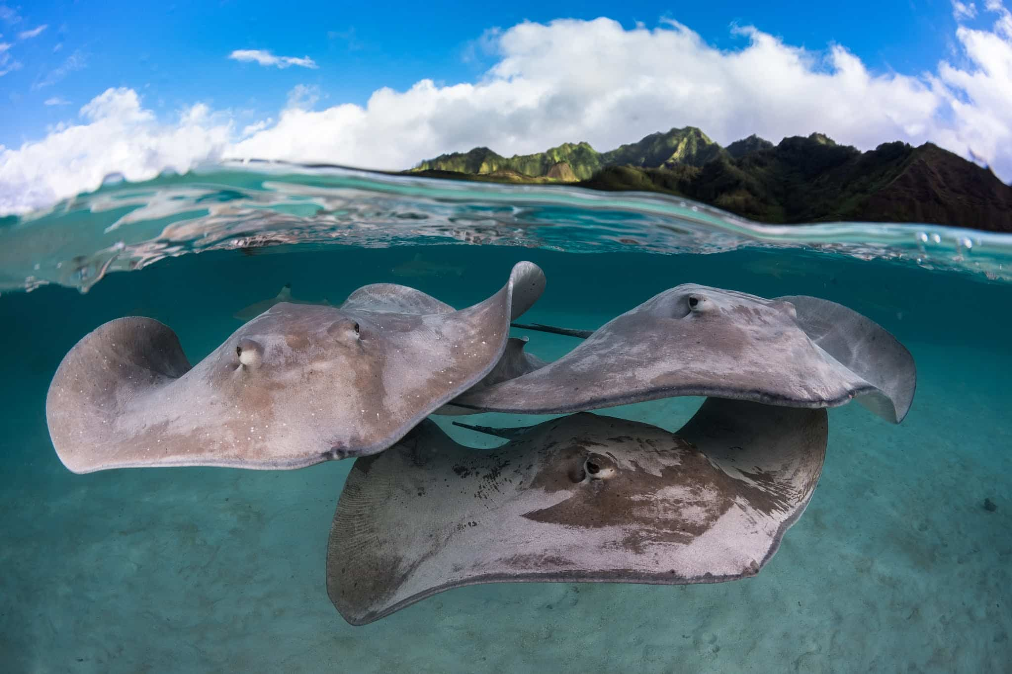 Polinesia Francesa, un viaje para disfrutar con los 5 sentidos 2