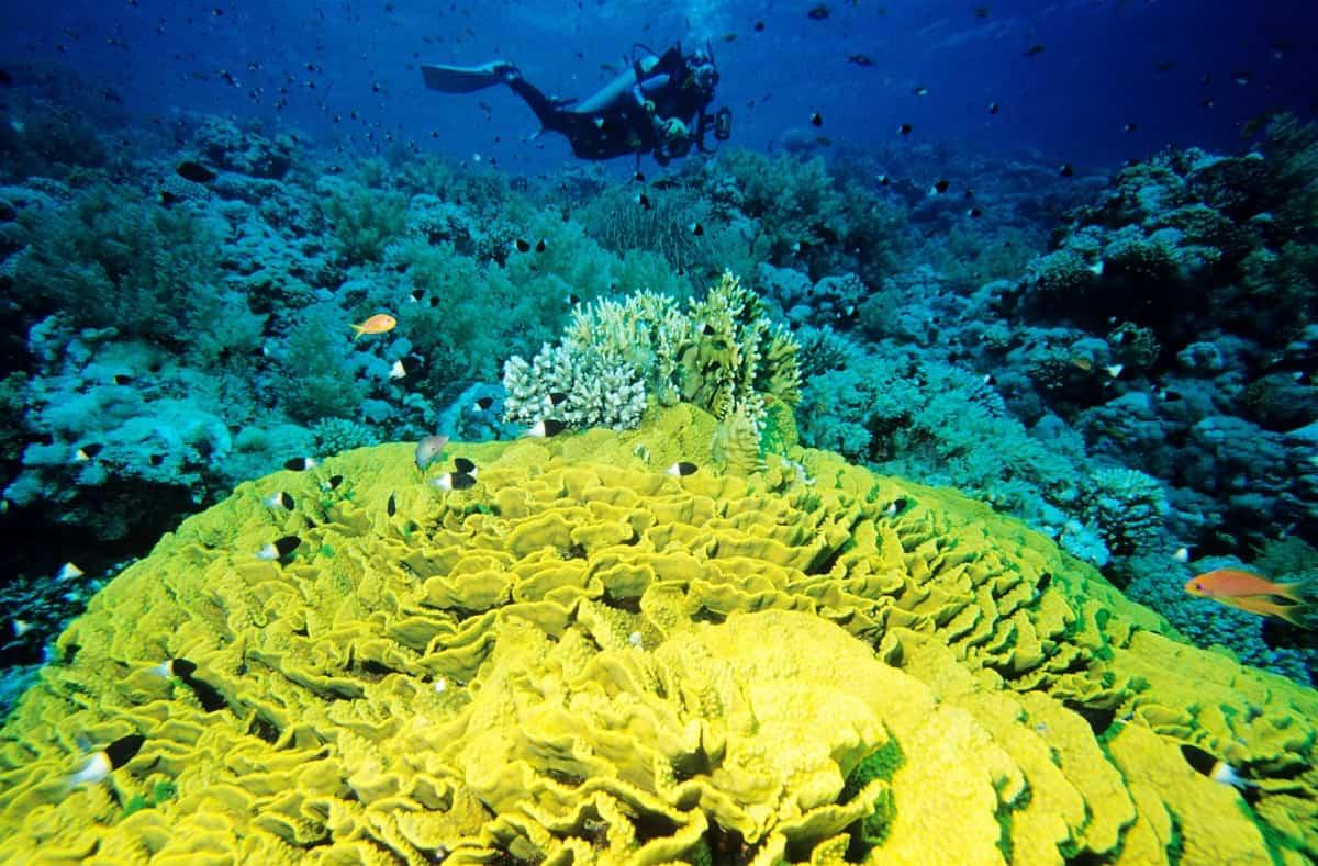 Egipto, un destino seguro en la senda de la recuperación del turismo 1